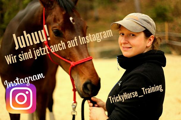 TrickyHorse auf Instagram Horsemanship Österreich , Horsemanship Steiermark , Pferdetraining, Gelassenheitstraining, Verladetraining