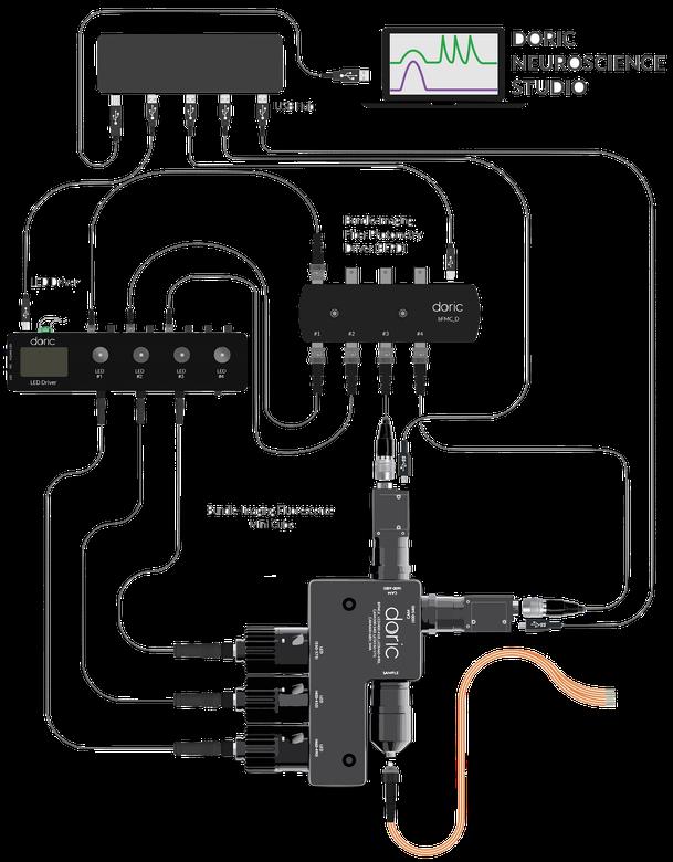 Multi-site Bundle Imaging Fiber Photometry System - GCaMP Isosbestic and Functional Excitations, RFP - 405nm/465 nm/560nm