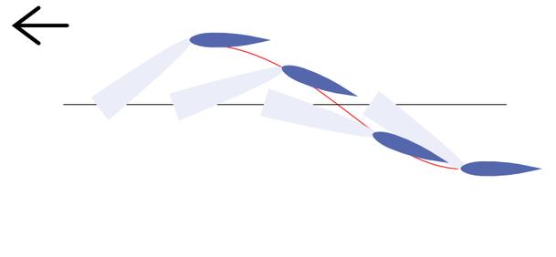 イルカの尾びれの動き