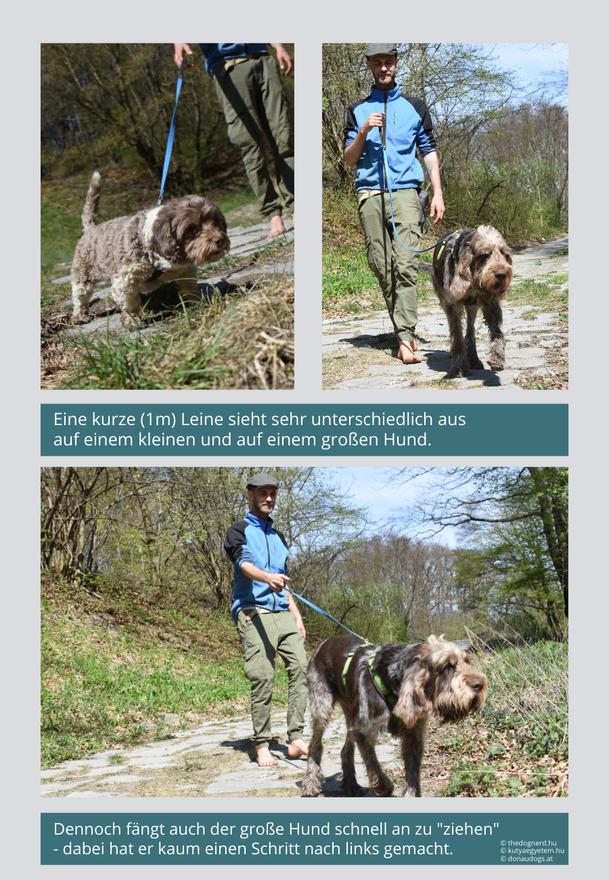 Vergleich: Kurze Leine an kleinem und großem Hund.