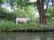 Wir gucken die Kühe an und die Kühe gucken uns an :)