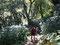 tiefster Dschungel am Weg zum Dhaulagiri