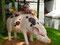 Auf das Schwein gekommen - zumindest laut chinesischem Kalender