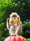 ... in der die Affen ein paradiesisches Dasein führen