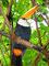 Reiche, bunte Vogelwelt - Tukan am Iguazu Nationalpark