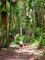 Immergrün - Wanderung über die Hügel von Koh Tao