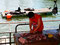 Hungrig - Seelöwen am Fischmarkt von Valdivia