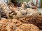 Perus Alpakawolle - Frauen sortieren die Alpakawolle in Arequipa