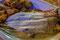 Dafür gab es für uns einen wundervollen Fisch auf dem Teller.