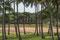 Anakena - in Anakena liegt der einizigen Sand(Bade)Strand der Insel. Und die Ahu Anakena.