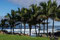 Hanga Roa - in drei kleinen, künstlich mit Wellenbrecher geschaffenen Buchten kann man baden. (26 Grad Luft / 23 Grad Wasser)
