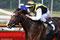 Earl of Winds unter Jockey Jozef Bojko bei seinem Sieg in Bremen in Mai 2008.© www.race-impressions.com