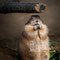 Hamburg: Tierpark Hagenbeck, Präiriehund