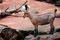 Zoom Erlebniswelt Gelsenkirchen: Ziege