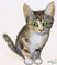 猫ミコ 画材/色紙・顔彩