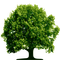 Control biológico de plagas en arboles y arbustos