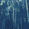 Serie: Sinnliches Buffet | Cyanotypie auf Damast | 14,5x12 cm | 2012