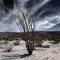 Joshua Rose - 2012  180x120cm,  fineArt print auf GlossArtFibre, kaschiert auf 4mm AluDiBond, Schattenfugenrahmen Nussbaum massiv