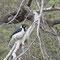 Oiseau aperçu dans la réserve de Ferranafe