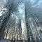 Forêt du Mont Forchat