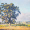 Kojonup Tree  SOLD