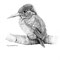 Kingfisher | Pencil, Polychrome on Paper | image: 210x290mm - framed: 370x450mm | M. Orgeron