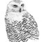 White Owl | Pencil, Polychrome on Paper | image: 230x310mm - framed: 390x480mm | M. Orgeron