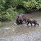 Grizzlymutter mit einem Jungen
