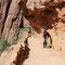 Steil gehts bergauf im Zion Nationalpark ....