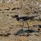 im heissen Wasser spaziert ein kleiner Vogel