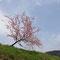 孤高として空に突き出す桜の木。