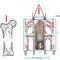Vergleich Kraftlinien: Knochen zu gotischer Kathedrale