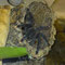 0.1 Avicularia cf. metallica