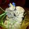 0.0.1 Avicularia sp. blue velvet