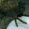 0.0.1 Avicularia braunshauseni
