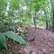 ササを除去した試験地で土壌の窒素循環などを調べる