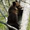 林内に現れたヒグマ