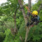 木登りによる猛禽類調査