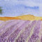 Lavendelfeld 10 x 20 cm
