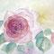 Rose 20 x 20 cm
