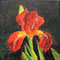 Iris acrylic on canvas 15 x 15 cm