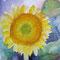 sunflower 20 x 20 cm