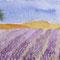 Lavender field 10 x 20 cm