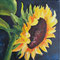 Sunflower acrylic on canvas 15 x 15 cm