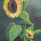 Sunflower acrylic on canvas 20 x 50 cm
