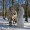 Fantasie & Wirklichkeit Fotografien und Gedichte Kathrin Steiger Winter Wald Märchenwald Schnee Schneefee  Fee Elfe Schneeprinzessin Pferd