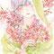 吉野(2015/04/29)