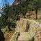 Olivenbaum-Terassen bei Biniaraix
