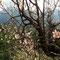 Mandelblüte bei Banyalbulfar