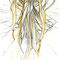 2010.5 画材:鉛筆 確かこれ描いて姉に「どういう絵なの?」って聞かれて「宇宙的な母性だよ」って答えたきがする。。そしたら「ぱねぇ」って返ってきた。